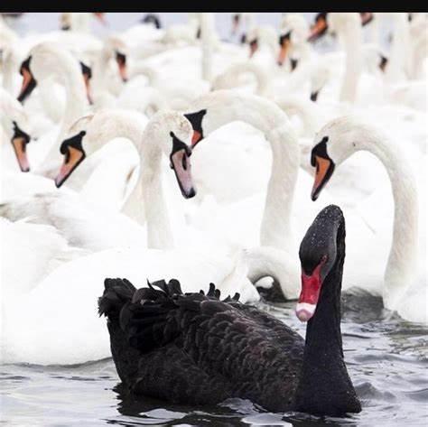 下半年需警惕十只金融黑天鵝