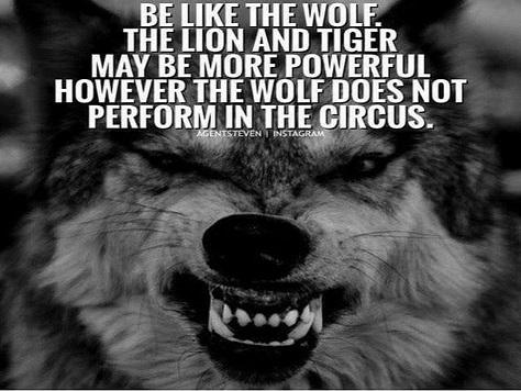 狼性企业家为什么?