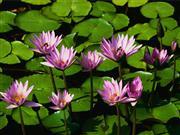 水米田的照片