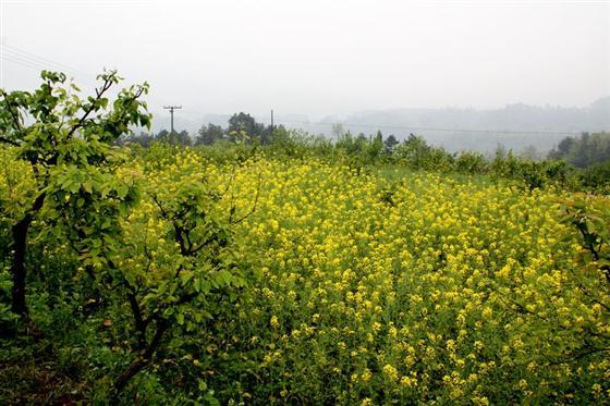 乡村风景速写临摹-乡村旅游 亟待开发的綦江风景