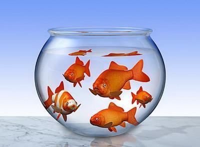 客厅鱼缸的摆放位置要注意什么