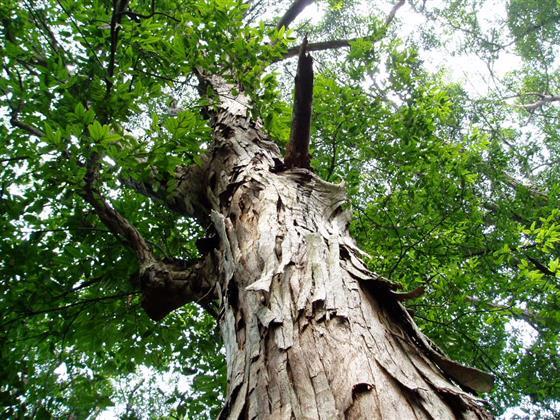 文化/艺术 > 树,财富与人生    《山有枢》来自于《诗经·国风&