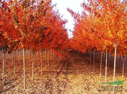赤黄橙绿好秋色