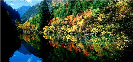 树在森林(2.0) - 党双忍图片