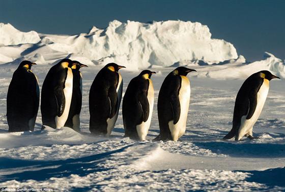 星相中的企鹅  企鹅的脚印