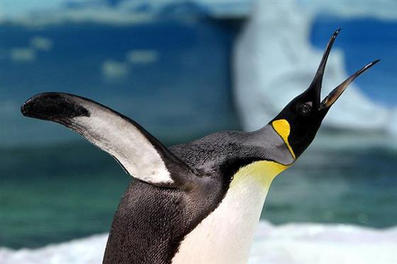 ENGUINs企鹅