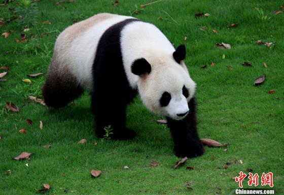 Ⅱ级重点保护野生动物80种