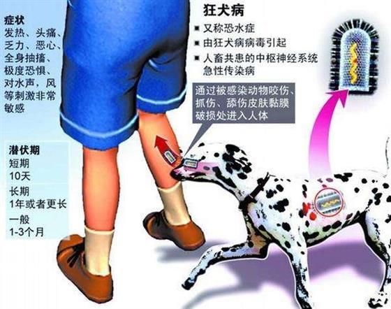 周蓬安:处理涉犬纠纷,海门警方欠法治素养