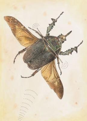 描写昆虫的片段