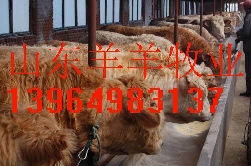 动物牛羊各个部位名称