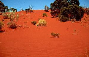 吉布生沙漠